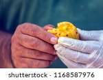 prickly fig fruit. some of the...   Shutterstock . vector #1168587976