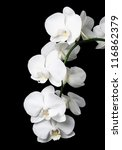 Stock photo white orchid on a black background 116862379
