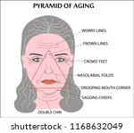 face of an old wrinkled woman | Shutterstock .eps vector #1168632049