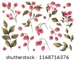 botanical illustration.... | Shutterstock . vector #1168716376