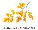 autumn branch with orange...   Shutterstock . vector #1168760773