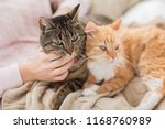 Pets  Hygge And People Concept...