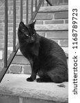 Stock photo a black cat hangs out on a residential stoop in black and white 1168789723