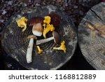 mix of fresh wild mushrooms ...