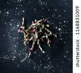 pasta food photography handmade ... | Shutterstock . vector #1168831009