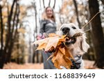 fun walking in the autumnal... | Shutterstock . vector #1168839649