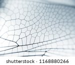 Stock photo dragonfly wing close up background with zoomed transparent lattice or macro chitin net 1168880266