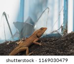 a lizard on a cement wall  and... | Shutterstock . vector #1169030479