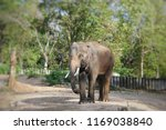 elephant in the forest | Shutterstock . vector #1169038840