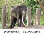 elephant in the forest | Shutterstock . vector #1169038846
