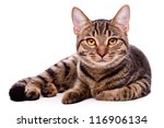 Stock photo portrait of brown eyed cat isolated on white background 116906134
