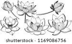 vector lotus flower. floral...   Shutterstock .eps vector #1169086756