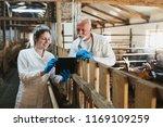 man and woman veterinarians at... | Shutterstock . vector #1169109259