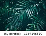 tropical palm leaves in... | Shutterstock . vector #1169146510