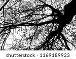 realistic tree silhouette ... | Shutterstock .eps vector #1169189923
