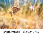 blues  coppers  hairstreaks  ...   Shutterstock . vector #1169240719
