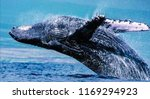 humpback whales  can push... | Shutterstock . vector #1169294923