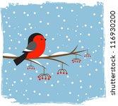 cute  bullfinch on branch rowan | Shutterstock .eps vector #116930200