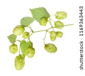 branch of cones and hop leaves... | Shutterstock . vector #1169363443