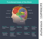 the brain is an important part... | Shutterstock .eps vector #1169406193