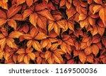 beautiful autumn background... | Shutterstock . vector #1169500036