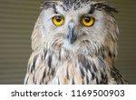 the night watcher owl looks 360 ... | Shutterstock . vector #1169500903