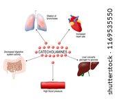 stress response system... | Shutterstock .eps vector #1169535550