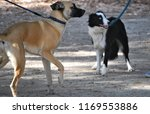 boxer cross at canine club   Shutterstock . vector #1169553886