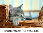 Stock photo a gray cat kitten sleeping in basket 116958136