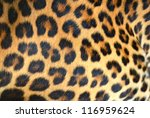 Hide Of Leopard