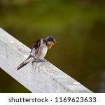 a dainty delightful  little... | Shutterstock . vector #1169623633