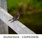 a dainty delightful  little... | Shutterstock . vector #1169623636
