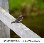 a dainty delightful  little... | Shutterstock . vector #1169623639