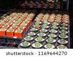 beautiful cactus pot in the... | Shutterstock . vector #1169644270