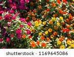 beautiful flower background | Shutterstock . vector #1169645086