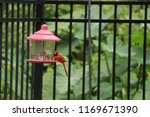 red male northern cardinal... | Shutterstock . vector #1169671390