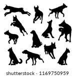 a set of detailed animal... | Shutterstock . vector #1169750959