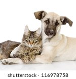 Stock photo the dog hugs a cat isolated on white background 116978758