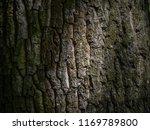 Small photo of Bark of tree closeup. Dark bark of tree. Bark of tree on macro photo. Tree structure closeup.