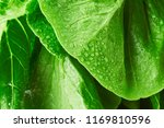 close up macro view of fresh... | Shutterstock . vector #1169810596