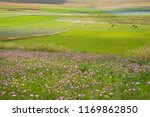 valley with flower fields  | Shutterstock . vector #1169862850