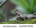iguana on a wall with a... | Shutterstock . vector #1169873530