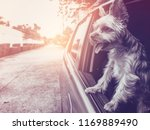 a happy  yorkshire terrier dog... | Shutterstock . vector #1169889490