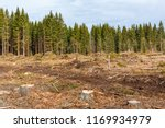 tree stumps in a clear cutting | Shutterstock . vector #1169934979