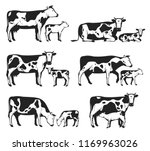 vector holstein cows and calves ... | Shutterstock .eps vector #1169963026