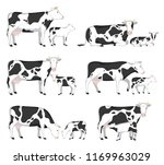 vector holstein cows and calves ... | Shutterstock .eps vector #1169963029