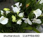 white orchid in pot | Shutterstock . vector #1169986480