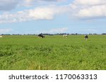wide view of the dutch meadows... | Shutterstock . vector #1170063313