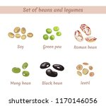 set of beans and legumes. soy ... | Shutterstock .eps vector #1170146056