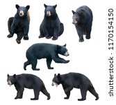 Black Bear Collection Isolated...